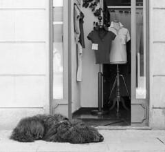 Relax (sirio174 (anche su Lomography)) Tags: cane cani dog como siesta riposo relax