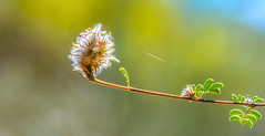 Rising to the light... (tomk630) Tags: usa plant nature colors sunrise virginia bokeh