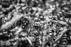 Swarf (Bogtramp) Tags: drill nikonbody manufacturing nikon tensile kitching industrial d500 weights engineering sharp steel grey westyorkshire county