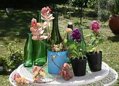 Primaveral (leograttoni) Tags: naturalezamuerta stilllife bodegn naturemorte maceta planta flor botella mesa jardn airelibre