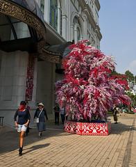 The Red Bandido (mysticislandphoto) Tags: travel viet nam vietnam saigon hochiminh people