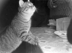 v_12_23x (sergey245x) Tags: кот коты монохром 貓 單色 cat