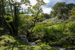 Along Newleycombe Lake_NK2_2469 (Jean Fry) Tags: burrator dartmoor dartmoornationalpark devon englanduk nationalparks newleycombelake uk westcountry brooks river streams water summer