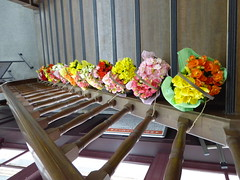 Lined with flowerpots (seikinsou) Tags: japan spring nikko jr railway station building upstairs waitingroom firstclass chandelier stairs flowerpot begonia handrail