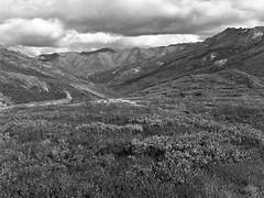 Denali National Park 2 (cobbu2) Tags: bronica etr 75mm f28 mc zenzanon kodak 320txp txp