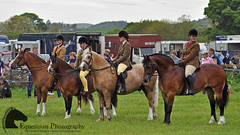 British native class (Vicktrr) Tags: show horses horse jumping native fife bull highland pony british hunter welsh harness cob calf gypsy coloured equestrian shetland champions equine agricultural calves clydesdale showjumping foal foals vanner 2015 drey workinghunter