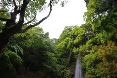 養老の滝 (macco☆) Tags: japan waterfall 日本 nippon 岐阜 gifu yoro 滝 養老の滝 養老 youro