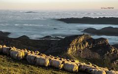Mar de niebla y bruma en el valle (Jabi Artaraz) Tags: paz valle zb niebla bruma gorbea tranquilidad ovejas rebaño ardiak euskoflickr aldamin artaldea jartaraz