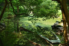 Green Boats (Marie.L.Manzor) Tags: boats reflections hangzhou china asia landscape nature lake trees water colorful nikon nikon610 marielmanzo httpswwwfacebookcommarielmanzor green mood natural landscapelightsun 800999favorites light gettyimagecollection tree sun sunset sunrise wow 1000favs 1000favorites sky 2016 marielmanzor gettyimage httpswwwinstagramcommarielmanzor