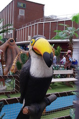 IMGP3391 (Steve Guess) Tags: uk england toucan pirate dorset gb poole