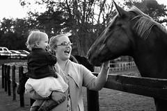 Horse Introduction (dorameulman) Tags: portrait blackandwhite horse monochrome landscape child michigan candid introduction dorameulman