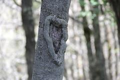 albero... (anilaamataj) Tags: mountain tree male landscape albero tronco montagna cuore bosco particolare zemer peme