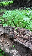 Verde (Camila Rojas Esparza) Tags: chile naturaleza verde planta trekking hojas paisaje tronco miniatura trebol tillshift
