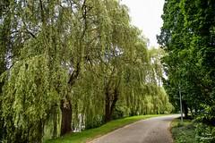 Diest 300716 09 (David Vanthienen) Tags: walk natu hike walking city stad diest hiking wandelen wandeling dieststadcitywandelingwandelenhikinghikewalkingwalknatuurnaturecitadelhalvemaandemerecocenterwarandebegijnhofbeguinage