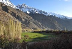 Nagar Valley (Furqan LW) Tags: nagarvalley hunzavalley gilgit pakistan landscape nature naturephotography blossom bloosom
