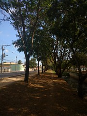 choose your way. (vitinhoscrates) Tags: natureza nature composition riodejaneiro rj tree bigtree planta plants plant flores flor flowers flower sun sunset sunshine morning brazil brasil contraste