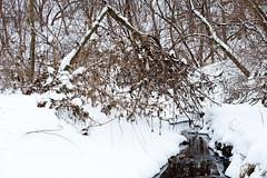 703_3070 (M Falkner) Tags: urban black creek forest concrete woods tank flood drain management watershed exploration sewer overflow ue urbex cso draining keelesdale