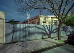 Parked Shadow (Andrew_Dempster) Tags: treeshadow night nightshot corrugatedfence australia nightlight longexposure southaustralia shadows mazda2 urban corrugatediron tree norwood house parkingsign suburban nightscape footpath suburbia pavedpath au