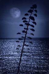 Silueta nocturna F00538 (Wifred Llimona) Tags: paisajes landscapes mar luna cielos skys azules paisajesnaturales wifredllimona lallimonafoto