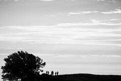 Regret (Thomas Hawk) Tags: marin marincounty modernsunsets mounttam priime priimephotowalk vintagecars vintagecarsandmodernsunsets bw silhouette tree fav10 fav25 fav50