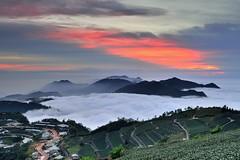 ~~ Tea farm sunset (Shangfu Dai) Tags:  taiwan     sunset  clouds cloudssea nikon d800  alishan xinding fog landscape formosa   afs1635mmf4
