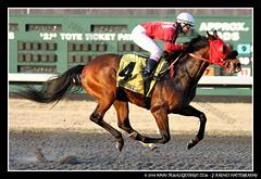 IMG_9623 (femalejockeys) Tags: femalejockeys turfway park female athletes horse racing horses thoroughbred kentucky derby