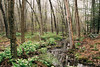 (Doug J.) Tags: film 35mm agfa vista 200 canon eos 500n rebelg 40mm f28 ef forest woods spring wet water moisture afterrain newengland trees plants stream flowing brook