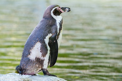 _FAN3957.jpg (Flemming Andersen) Tags: neumnster schleswigholstein germany de zoo animal
