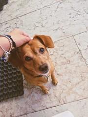 I tuoi occhioni sono lo specchio della tua bont! (P.Elen) Tags: montorio nature little dog cane animale domestico casa felice