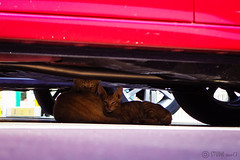 Today's Cat@2016-08-11 (masatsu) Tags: cat catspotting thebiggestgroupwithonlycats pentax mx1