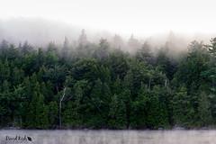 Foggy Sunrise (dekish1) Tags: 2v3a6945jpg fog canon7dmarkii canon1755mm lakeplacid