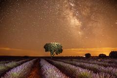 _MG_2042_2 copia (visnuh) Tags: brihuega guadalajara nocturnas valctea estrellas stars verano noche summer night lavanda lavender camposdelavanda canoneos70d