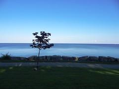 still (Lovely Pom) Tags: water lake calm still tranquil tree lone scenery rocks blue