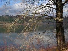 Tired Tree (maytag97) Tags: winter tree river dreary columbiariver desolate leaflesstree roosterrockstatepark naturemasterclass sx50 maytag97