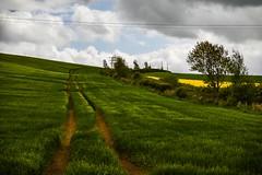 A field (ola_er) Tags: field green east lothian rapeseed crop road