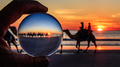 Camel Train Cable Beach (jan_clewett) Tags: cablebeach broome kimberleys sunset camels crystalball seascape cameltrain