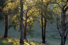Hulls Road (dustaway) Tags: landscape lateafternoon light trees gully hullsroad northcoast rurallandscape nsw australia winter