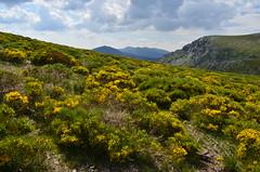 La maliciosa (Lara Sanz Serrano) Tags: madrid espaa mountain colour colors beautiful yellow wonderful landscape amazing spain nikon paisaje sierra montaa d5100