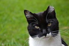 aores (ELENA TABASSO) Tags: parco cats animal animals cat gatto gatti animali animale vacanza saomiguel isola aores azzorre