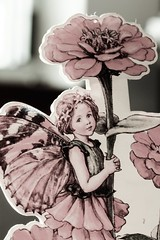 ...zinnia fairy... (dawn.tranter) Tags: portrait macro childhood closeup vintage cards memories daughter fairy zinnia treasures yesteryear macromondays dawntranter 7dwf