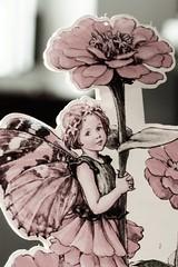 ...zinnia fairy... (dawn.tranter) Tags: portrait macro childhood closeup vintage cards memories daughter fairy zinnia treasures yesteryear macromondays dawntranter 7dwf