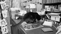 A snack for a cat (Ji-) Tags: blackandwhite bw toronto ontario canada cat chat noiretblanc bokeh bookstore snack fujifilm fujinon queenstreet librairie xt1 xf16mmf14wr