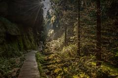 Schsische Schweiz - Entlang der Schrammsteine (Pana53) Tags: photographedbypana53 pana53 schrammsteine badschandau naturundlandschaftsfotografie naturfoto naturschutzgebiet elbsandsteingbirge waldwege wald bume bohlenweg gebirge sachsen bundesland lichtschatten lichteinfall nikon nikond810 outdoor landschaft schsischeschweiz