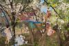 Between Vine and Mother_ c-print_ 180X120(cm)_ 2016 (YiKyung Cho) Tags: collage painting photo vine 사진 그림 yikyungcho 조이경 갤러리jj galleryjj