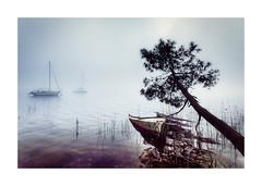 MATIN D'AVRIL (EXTRAIT) Tags: lacgironde hourtin lachourtin barque brouillard pin brume matin brumematin