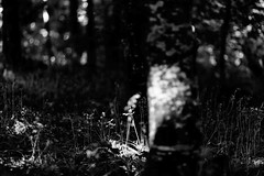 Bluebell in the wood (Paul T McDowell Photography) Tags: 2016 blackandwhitephotography bluebell bokeh bright camera canonef85mmf18usm canoneos5dmarkii cloudy colour cookstown countytyrone day digital drummanor fineartphotography flora forest hiking horizontal image landscape landscapephotographer lens nature northernireland orientation outdoor park paultmcdowell paultmcdowellphotography people photography places season spring time unitedkingdom weather year
