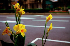 _531 (Taiwan's Riccardo) Tags: 2016 taiwan color negative 135film kodakcolorplus200 rangefinder zeissikon contessa35 zeisslens tessar fixed 45mmf28