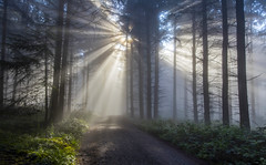 Auf dem Calmond am Morgen (Heinz Peierl) Tags: calmont edigereller bremm landschaft natur wandern angeln urlaub ferien cochem