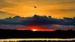 Marsh Sunset Clouds & Bird (dianne_stankiewicz) Tags: coastal marsh flight bird clouds sunset outdoors nature