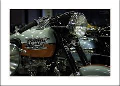 Triumphs (Descended from Ding the Devil) Tags: nationalmotorcyclemuseum triumph beyondbokeh bokeh motorcycle motorbike british depthoffield dof selectivefocus photoborder indoor headlamp badge canon40d canon60mmmacro primelens